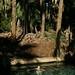 Rio cristalino e de água quente-Mataranka