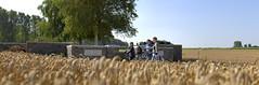 Westhoek / Landscape with graveyard (VISITFLANDERS) Tags: europe belgium wwi worldwari battlefield flanders inflandersfields westhoek warandpeace 201418 thegreatwarcentenary visitflanders