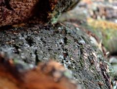 GNARLY BARK (simongavin83) Tags: wood tree log stem bark gnarly ourdailychallenge nikond5100