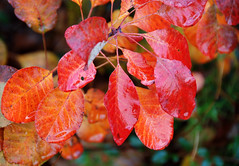 Season of Mists and Mellow Fruitfulness.... (antonychammond) Tags: autumn leaves poetry keats johnkeats potofgold mfcc blueribbonwinner coth thegalaxy odetoautumn virtualjourney mygearandme rememberthatmomentlevel4 rememberthatmomentlevel1 rememberthatmomentlevel2 rememberthatmomentlevel3