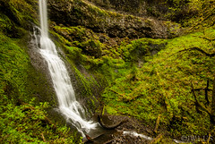 Image ID# Whalen-120429-2998 | Silver Falls State Park Six (joshwhalen) Tags: travel trees usa green water horizontal oregon america forest river flow photography us photo waterfall moss rainforest peace unitedstates vibrant unitedstatesofamerica fineart peaceful fantasy rivers northamerica flowing silverfallsstatepark magical mossy tranquil contentment fineartphotography plunge photogaph woodburn stockphotography earthtone peaceofmind mossyrock plunging fineartphoto mossyrocks geologicalfeature fineartphotograph joshwhalenphotography whalenphotography joshwhalencom