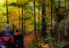 The Hay ride 1 (Bill Pawlitzki) Tags: color colour fall colors photo nikon flickr ride most hay leafs ever effect orton viewed 8800