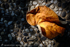 autumncomes03 (callbusybiz) Tags: life autumn sunset leaves lens snapshot evil  fujifilm taichung kit   xf     35mmf14    apsc mirrorless xpro1