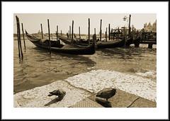 Gondolas at St Marks, Venice. (kev350d) Tags: venice italy gondolas waterside stmarks boats bw mono toned