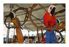 Aves (o.dirce) Tags: artesanato feira mercado aves madeira ipanema riodejaneiro odirce brasil