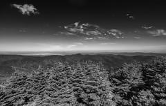 Mount Mitchell State Park - North Carolina (Philip Scott Johnson) Tags: mountmitchell mtmitchell blueridgeparkway blueridgemountains northcarolina appalachianmountains appalachian mountmitchellstatepark