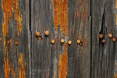 116in2016 #55 beauty is in the eye of the beholder (Karen Juliano) Tags: rusty wood board plank nail orange peeling cracked chipped grain