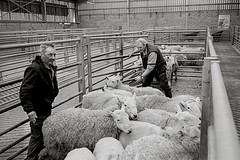 (moritz.vanheel) Tags: scotland schottland skye glen coe highlands portree etive dingwall auction cattleauction cattlemarket mart oldmanofstorr quiraing leica leicam6 trix d76