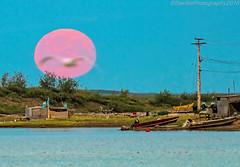 AAB_3748s (savillent) Tags: tuktoyaktuk northwest territories canada arctic north landscape waterscape bird moon lunar full pink evening sensational nikon capture shot beach august 2016
