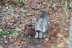 Today's Cat@2016-09-08 (masatsu) Tags: cat thebiggestgroupwithonlycats catspotting pentax mx1