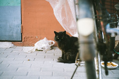 Stare. (MichelleSimonJadaJana) Tags: color sony ilce7rm2  a7rii a7r ii full frame thirdpartylens manual fullframe voigtlander vme adaptor fe mount lomography x zenit new jupiter 3 1550 l39m 50mm f15 lomo nex vsco documentary lifestyle snaps snapshot street photography china   beijing