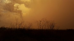 Fragili (mazzottaalessandra) Tags: sunset orange rami secco tree storm beautiful amazing italy clouds samsung pioggia rain