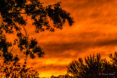 Back Yard Sunset (tspottr723) Tags: silhouette fire nj nikon d7100 tamron 150600 essex county sunset sky clouds red orange colors trees