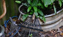 Workin' Man Blues (BKHagar *Kim*) Tags: bkhagar drill rake yard tools metal trough wateringtrough plants outdoor blue cord riversong