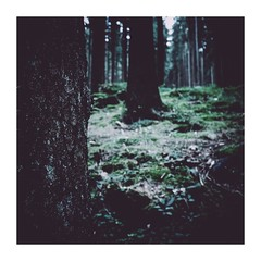 kingworm2 (seba0815) Tags: ricohgrdiv grdiv forest wood woods tree nature outdoor green light dark darkphotography vsco lr preset square color shadow seba0815 bokeh black mood atmosphere melancholy kingworm