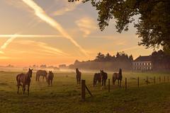 Encounter (uw67) Tags: landscape niederrein kleve sonnenaufgang sunreise landschaft county emmerich