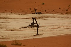 Deadvlei, el lago muerto / The Dead Lake, Namib (Jos Rambaud) Tags: deadvlei lago deadlake desierto desert acacias tree arboles arbol arena sand dunes dunas naturaleza nature nata namib namibdesert namibia africa paysage paisaje landscape viaje travel