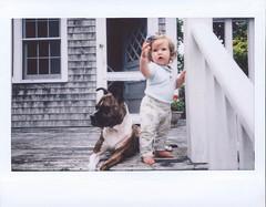 Penelope & Greta (syzygial) Tags: greta pibble americanpitbullterrier pitbull boxermix boxer babysitter rescuedog
