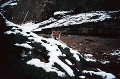 first morning walks (Timoleon Vieta II) Tags: winter portrait colour film wolf little diary krumlov cle timoleon