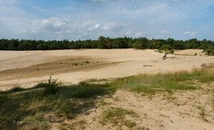 Nature reserve Beekhuizerzand (joeke pieters) Tags: holland nature netherlands landscape nederland veluwe landschap gelderland beekhuizerzand zandverstuiving shiftingsand 1010570 panasonicdmcfz150