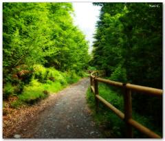 Camino a Artiga de Lin (Nati C.) Tags: naturaleza camino catalunya pirineos valldaran efectoorton cruzadatcnica