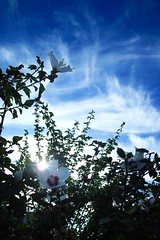 R0015065 (Julian2180) Tags: blue sky cloud tree green art field yellow photoshop pig gallery shots hill poland polska tags more worlds and 13 philipp soe outstanding rapeseed gra klinger zielona supershot lubuskie abigfave platinumphoto anawesomeshot colorphotoaward superaplus aplusphoto babimost theunforgettablepictures colourartaward artlegacy dcdead lightiq