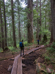 Wooden walkways (Urban Disturbance) Tags: usa washington hiking pacificnorthwest mountainloop ashlandlakes