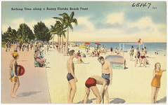 Bathing time along a sunny Florida beach front
