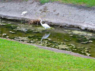 Looking for breakfast
