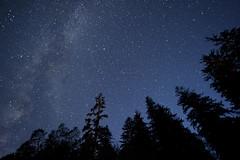And They Are Watching Me (Northern Straits Photo) Tags: longexposure trees canada beautiful night stars amazing bc britishcolumbia awesome vancouverisland westcoast fairylake milkyway northernstraitsphotography ireenanieuwenhuisworthy