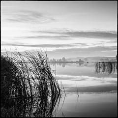 Water (warmianaturalnie) Tags: bw white lake black water grass sunrise square landscape mono pond poland warmia