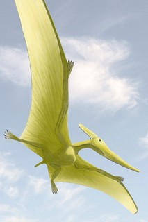 Pteranodon in flight: This thing looks a lot like Destination America's .Mountain Monsters depiction of the Snallygaster, an 800-pound flying reptile with a humungous wingspan that legend has it, inhabits Preston County, W.Va., From ImagesAttr