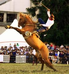 Equilibrio (Eduardo Amorim) Tags: horses horse southamerica caballo uruguay cheval caballos cavalos prado montevideo pferde cavalli cavallo cavalo gauchos pferd hest hevonen chevaux gaucho 馬 américadosul montevidéu häst uruguai gaúcho 말 amériquedusud лошадь gaúchos 马 sudamérica suramérica américadelsur סוס südamerika jineteada حصان άλογο americadelsud gineteada ม้า americameridionale semanacriolla semanacriolladelprado eduardoamorim semanacriolladelprado2011 ঘোড়া