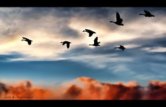 Silhouette (Jeff S. PhotoArt) Tags: sunset sky ontario canada bird nature silhouette collingwood wasaga georgianbay ducks milleniumpark shipyard wasagabeach bluemountain ontariocanada collingwoodontario nottawasagabay collingwoodharbour collingwoodpier