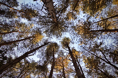 Autumn Timelines (mattwareherts) Tags: wood autumn shadow brown tree leaves yellow forest lens gold leaf angle pov wide highlight circular tonkia flickrheartsecondchance photoforrecreationbronzesecondchance platinumheartsecondchance peacepromotion photoforrecreationgoldsecondchance photoforrecreationsapphiresecondchance heartawardpromotion peaceplatinumpromotion peaceplatinumsecondchance photoforrecreationdiamondsecondchance photoadditionscomplete