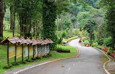 ถนนในโครงการส่งเสริมการเกษตร พระตำหนังปางตอง