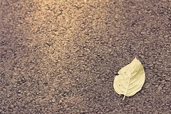 Simplicity (Kirotea) Tags: texture tarmac closeup grey one leaf shine floor quote pavement ground september single simplicity lone worcestershire sole simple minimalist goldenhour 2012 evesham nx20 assignment52 samsungnx samsungnx20 assignment52392012