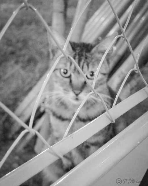Today's Cat@2012-10-05