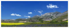 Castelluccio di norcia Panoramica   n1 andrea quercioli (Andrea Quercioli) Tags: travel sky italy copyright green yellow clouds poster landscape photography photo italia nuvole foto estate image blu pano postcard giallo cielo panoramica postcards karma flickrcentral photographicart iq colori paesaggi nikondigital photoart geographic umbria fotografo lilla fotografi artisticphotography bellaitalia panoramiche immagini travelphotography photoreport digitalcameraworld beautifulcapture fotografiromani nationalgeographicbyitalianpeople bestoflimmaginedellitalia iborghipibelliditalia extraordinarycompositions photographsofitaly mountainsmountainsjustmountains nikondigitallearningcenter italybestoflimmaginedellitalia qualityonly theworldthroughphotography discoveryphotospost1votefor3 thelightpainterssociety projectworldwidepicturesofplacesaroundtheworld afsdxnikkor35mmf18g nikond7000 castelucciodinorcia gettyimagescallforartists flickrstarspost1give5stars iamnikon photographymagazineiheart nikond7000cafe nikond7000club andreaquercioli fotograficonlapmaiuscola artbyfoto photographsofitaly magicaitalia extraordinarycompositions shieldofexcellencelevel1post1award5 inspirationallandscapeimages