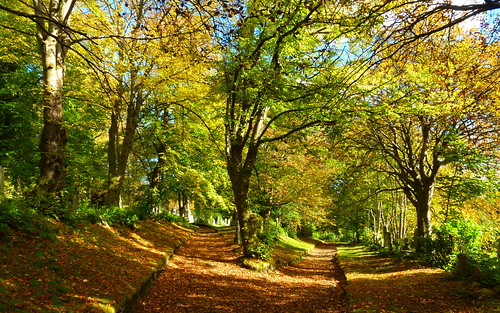 Woodside Autumn Footpaths