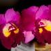 "Ootaara Island Flare ""Fragrance"" – Alex Nadzan – Third Place"