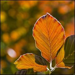 Autumn? (BM-Licht) Tags: tree salzburg nature austria leaf sterreich nikon natur 1750 tamron schloss blatt bltter bume baum hellbrunn d7000