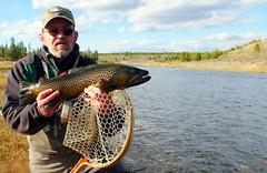 P1060775 (Nokinrocks) Tags: fish montana yellowstonenationalpark yellowstone flyfishing trout browntrout westyellowstone madisonriver bigbrown fallmadisonrivertrout