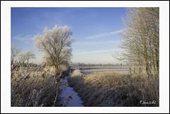 Siel (Onascht) Tags: budjadingen feld niedersachsen sonya200 winter baum blauerhimmel blue eis heaven land siel tree landscape