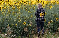 Spreading Joy (Doris Burfind) Tags: flowers farm sunflowers yellow nature people caledon