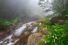 The Dream Creek - 0156 (J & W Photography) Tags: 2016 anjie china dashilang jwphotography june zhejiang cascade creek exposureblending fog landscape rock stream tree waterfalls waterscape