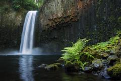 Abiqua Falls Fern 3_5 (Gwmullis) Tags: oregon gregmullisphotography abiqua falls waterfall