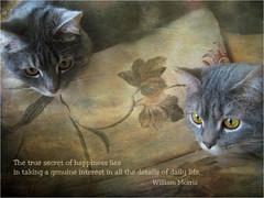 Detalles... (musymas) Tags: musymas poconcio petunia gato cat textura