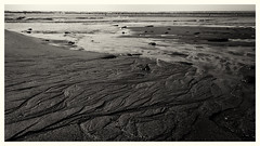 (Totio Todorov) Tags: nature landscapes beach ocean monochrome black white chatham cape cod