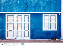 House facade in the Otrobanda District in Willemstad, Curacao. (Vincent Demers - vincentphoto.com) Tags: abcislands amriquedusud antilles antillesnerlandaises architecture carabes caribbean caribbeanisland cat chat city curacao curaao destinationdevoyage destinationtouristique door dutchcaribbean dutchcaribbeanisland facade faade historichouse historicsite home house iledescarabes kingdomofthenetherlands maison netherlandsantilles otrobanda otrobandadistrict photodevoyage photographiedevoyage porte royaumedespaysbas sitedupatrimoinemondialdelunesco sitehistorique southamerica tourism tourisme travel traveldestination travellocation travelphoto travelphotography trip unescoworldheritagesite unesco ville voyage willemstad window siteunesco cw